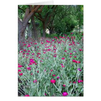 Jardín del clavel tarjeta de felicitación