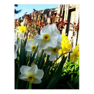 Jardín del narciso postales