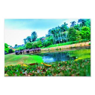 jardín del paisaje fotografias
