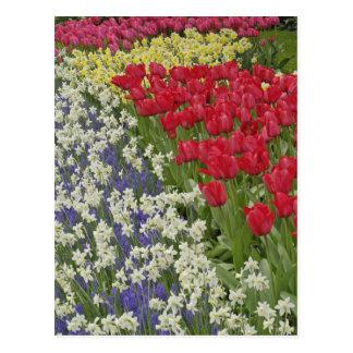 Jardín del tulipán y del narciso jardines de Keuk Postal