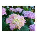 Jardín verde de las postales de las flores de los