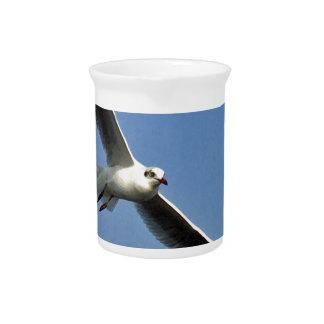 Jarra Las gaviotas son pájaros hermosos