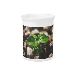 Jarra Planta frondosa verde que comienza a crecer en los