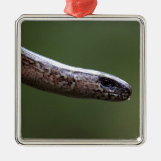 Jefe de un Slowworm, Anguis fragilis Adorno Navideño Cuadrado De Metal