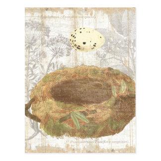 Jerarquía con el huevo manchado postal