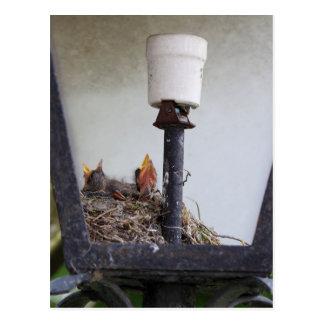 Jerarquía del pájaro en una lámpara de calle postal