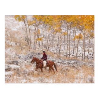 Jinete de lomo de caballo 18 postal