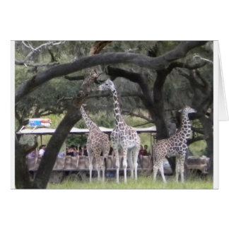 Jirafa 3 en el safari tarjeton