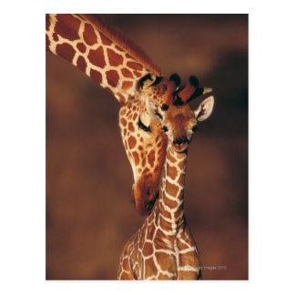 Jirafa adulta con el becerro (camelopardalis del postal