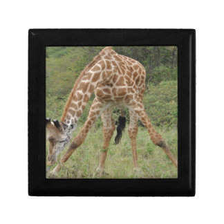 jirafa caja de recuerdo