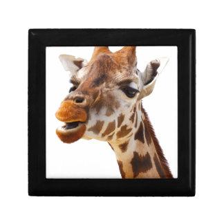 Jirafa de la selva de África del safari Cajas De Recuerdo
