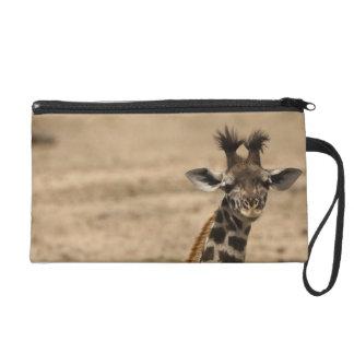Jirafa del Masai, camelopardalis del Giraffa, desc