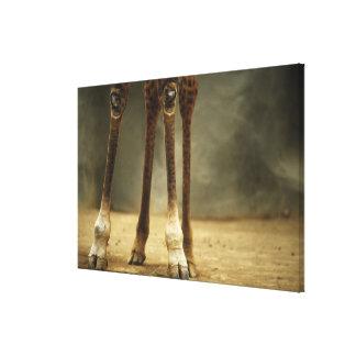 Jirafa del Masai, opinión de ángulo bajo de Impresión En Lienzo