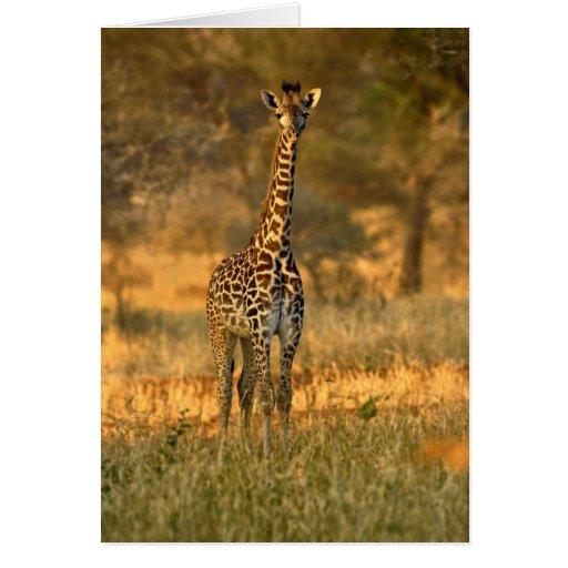 Jirafa juvenil, camelopardalis del Giraffa Felicitacion