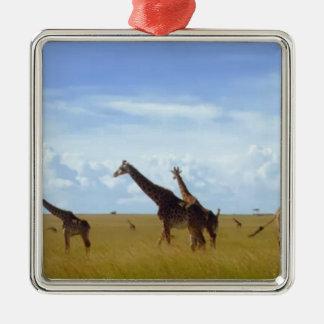 Jirafas africanas del safari ornato