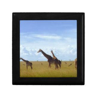 Jirafas africanas del safari cajas de regalo