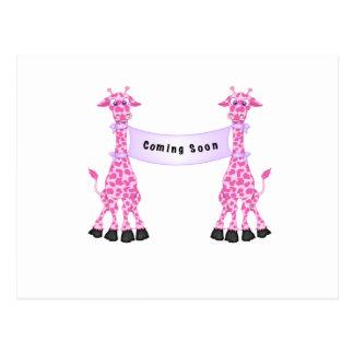 Jirafas rosadas que vienen pronto postal