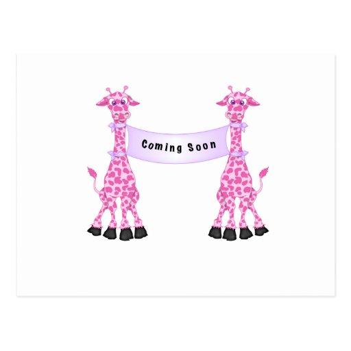 Jirafas rosadas que vienen pronto postales