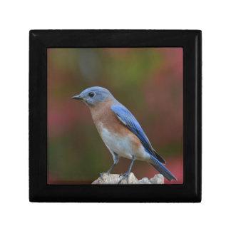 Joyero Bluebird exótico