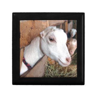 Joyero Cabra blanca