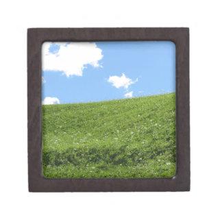 Joyero Campo herboso en la colina del balanceo contra el