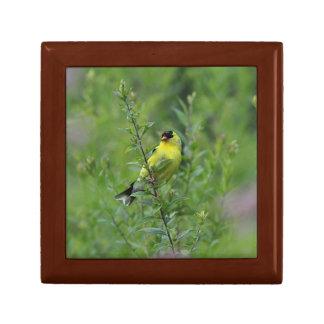 Joyero Goldfinch americano
