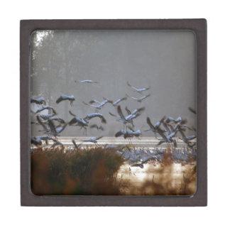 Joyero Grúas del vuelo en un lago