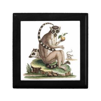 Joyero Ilustraciones del Lemur