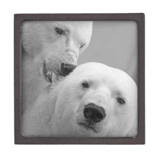 Joyero Osos polares