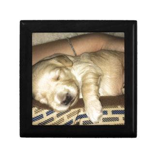 Joyero Perrito el dormir GoldenDoodle