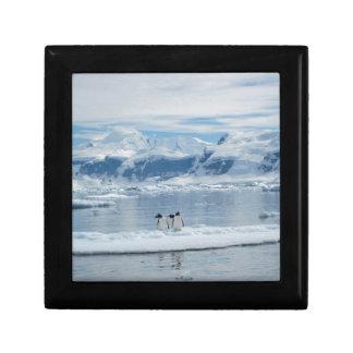 Joyero Pingüinos en un iceberg