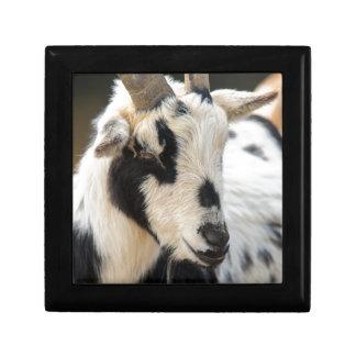 Joyero Retrato de la cabra