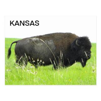 Kansas - bisonte/búfalo Bull Postal