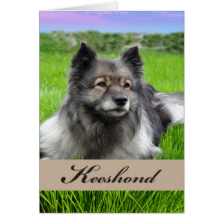 Keeshond, perro en la hierba, interior en blanco tarjeta de felicitación