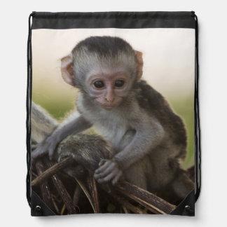 Kenia, reserva del juego de Samburu. Mono de Mochila