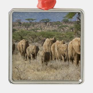Kenia, reserva nacional de Samburu. Elefantes Ornamentos Para Reyes Magos