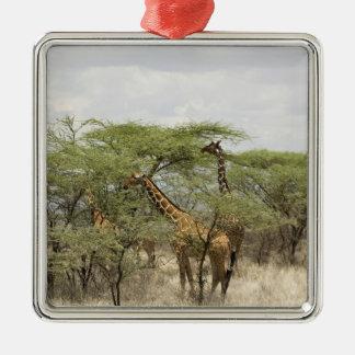 Kenia, reserva nacional de Samburu. Rothschild Ornamento De Navidad