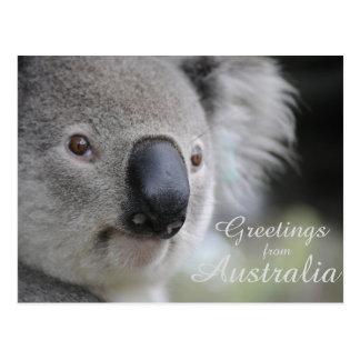Koala 2 - Saludos Postal