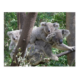 Koala QLD Australia de la postal