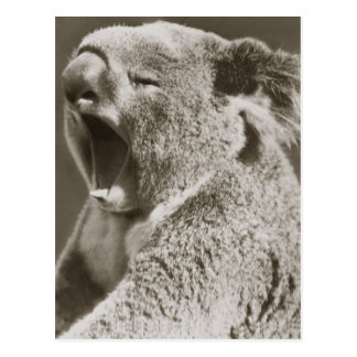 Koala soñolienta que bosteza postal