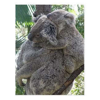 Koalas QLD Australia de la postal