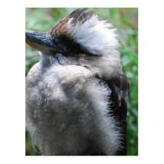 Kookaburra australiano postal