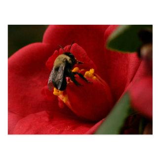 La abeja come un cierto almuerzo postal