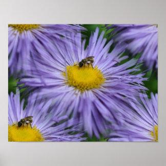 La abeja en púrpura florece la naturaleza poster