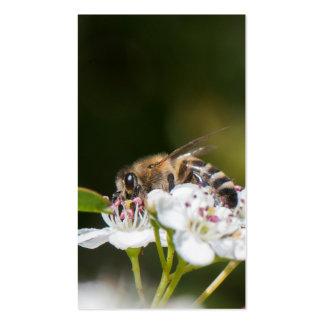 La abeja recoge el polen tarjetas de visita