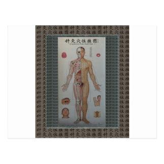 La acupuntura señala arte completo de la pared postal