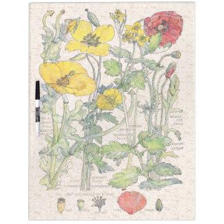 La amapola botánica del vintage florece al tablero