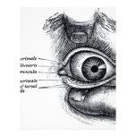 La anatomía del gris - globo del ojo flyer a todo color