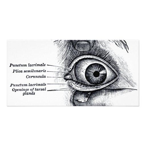 La anatomía del gris - globo del ojo tarjeta fotografica