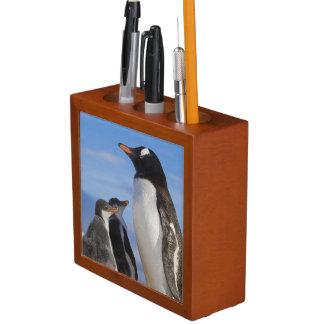 La Antártida, ensenada de Neko (puerto). Pingüino